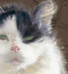Fence Cat, step 2: closeup