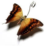 Clockwork butterfly by Mike Libby