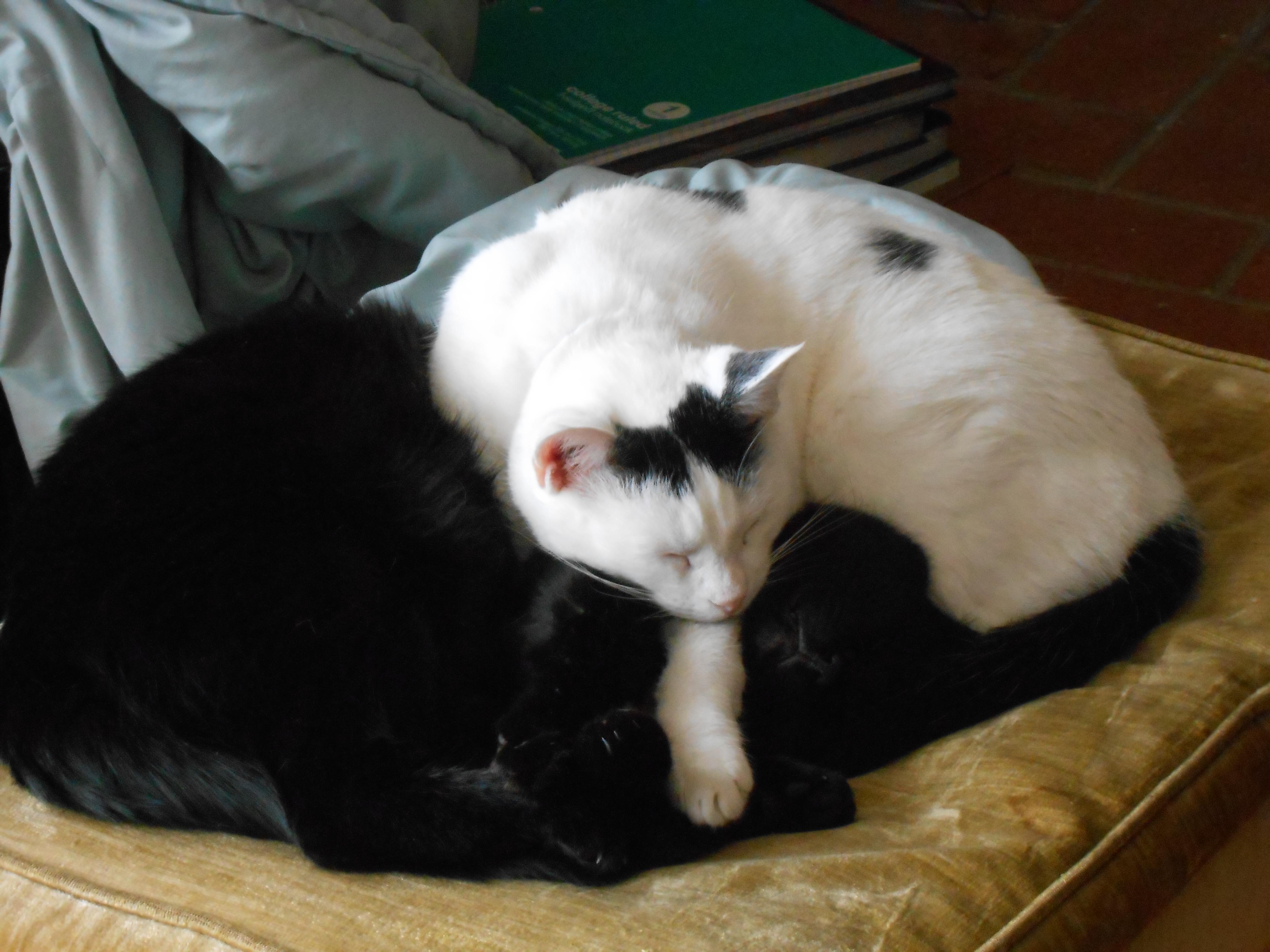 Cat pile: Valentine and Ubaid
