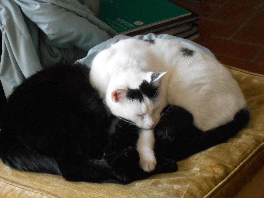 Cat pile: Valentine and Ubaid